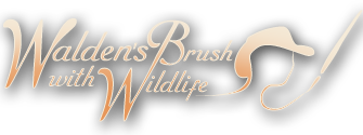 Walden's Brush with Wildlife
