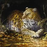 Walden_Leopard